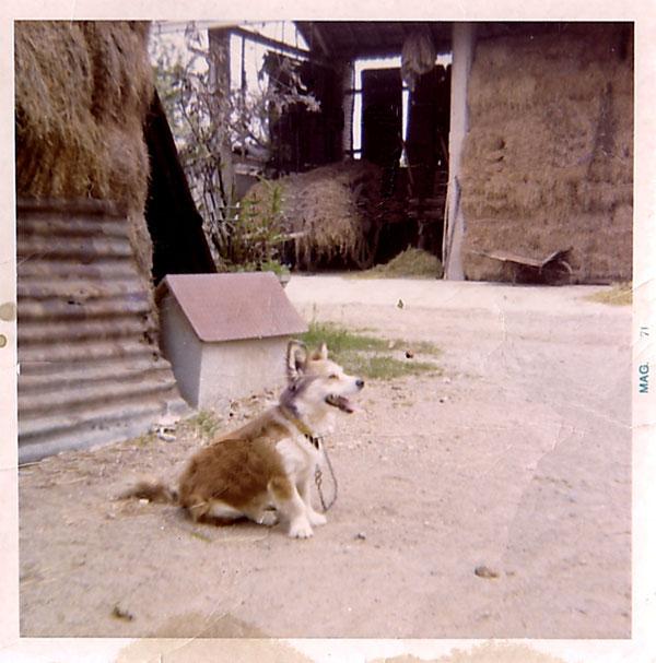 1971 - Il cagnolino di P. Nando