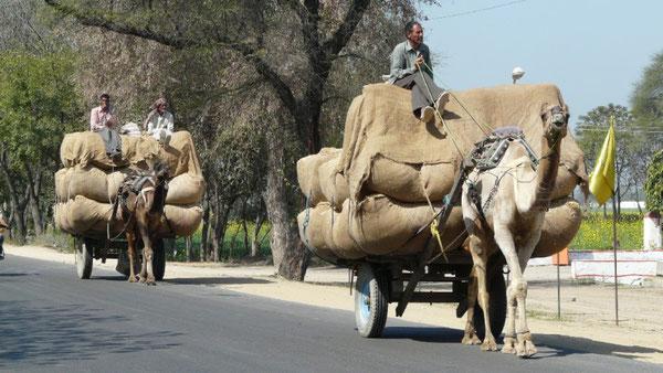 Des le depart de Delhi, de tels attelages ne sont pas rares sur les routes