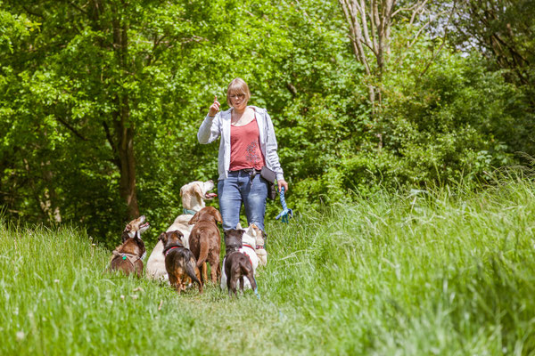 Hundetrainerin Rebecca gibt einer Hundegruppe in Hamburg Kommandos