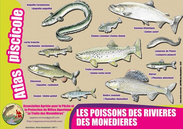 Poisson truite corrèze Monédières