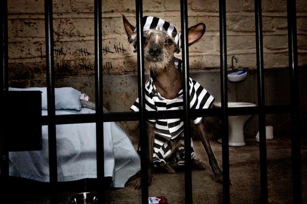 Chini Prisoner - Chini заключенная