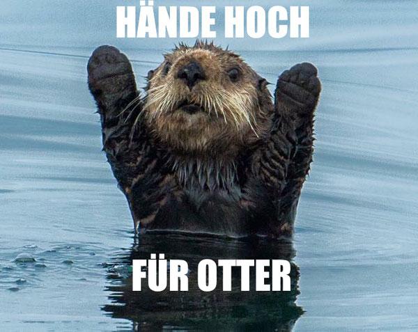 fauntleroy otter hands up blog rettung der menschheit
