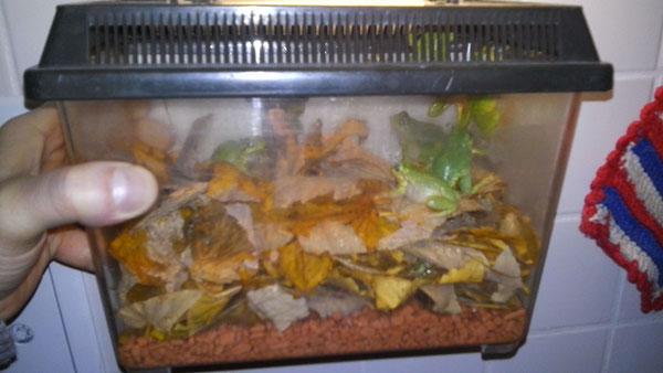 Faunabox als Winterbox