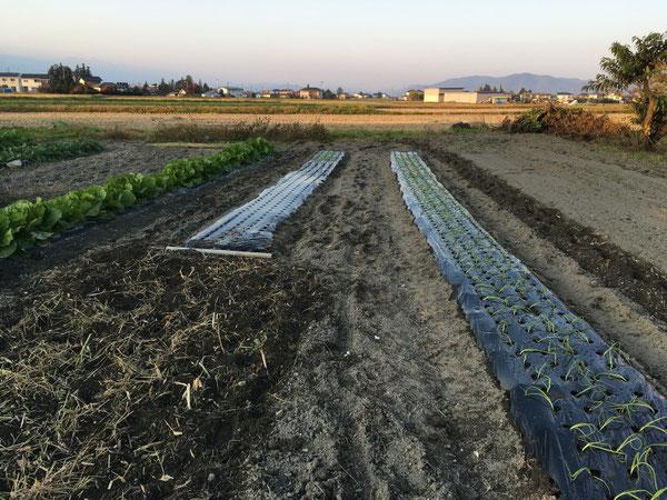 news設計室 事務所 半農半建 農作業 里芋 野菜づくり