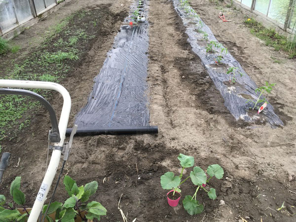 news設計室 事務所 半農半建 農作業 野菜苗 植え付け 野菜づくり ハウス