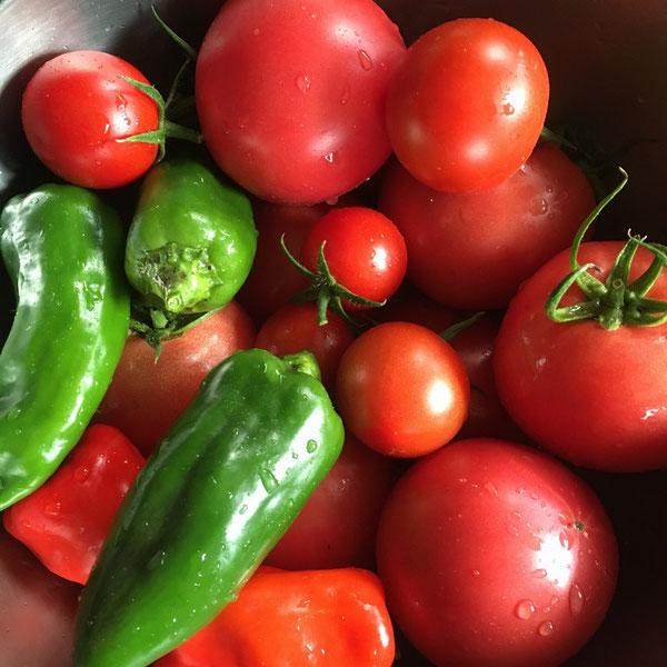 news設計室 建築家 半農半建 農作業 野菜づくり ハウス栽培 ピーマン トマト
