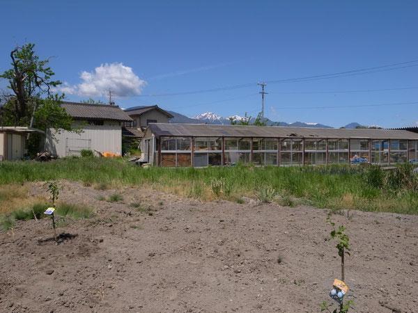 news設計室 建築家 半農半建 農作業 野菜づくり プルーン