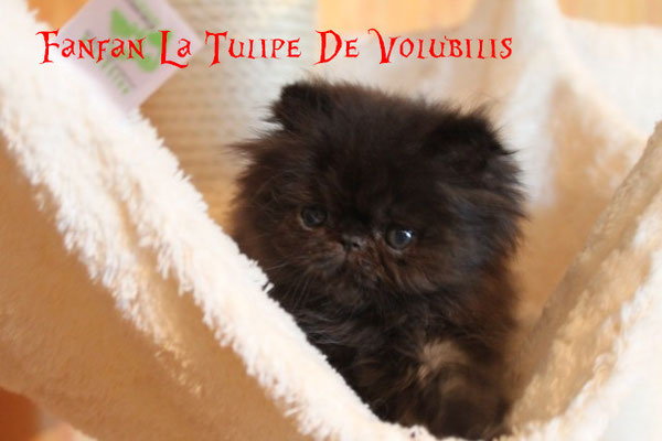 + de photos de Fanfan La Tulipe cliquez sur sa photo
