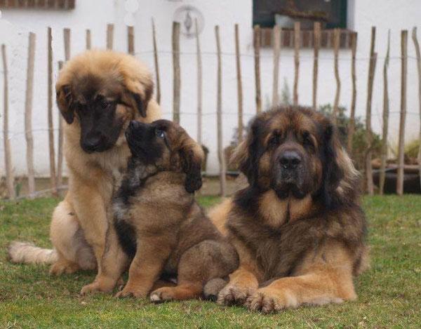 Papa Zolo mit Töchter Fjordi und Gretje