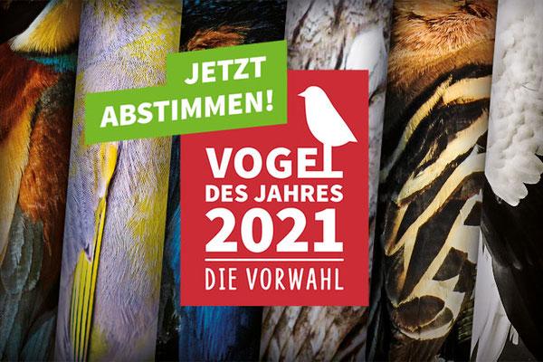 """Wähle deinen Lieblingsvogel zum """"Voges des Jahres"""" 2021!"""
