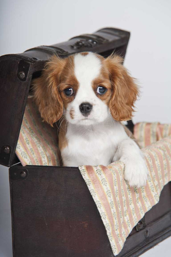 Lillys erster eigener Hund und Tröster in allen Lebenslagen!