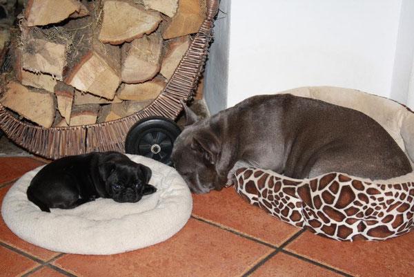 Mama Lola und Klein-Carlotta in der Mittagsruhe!