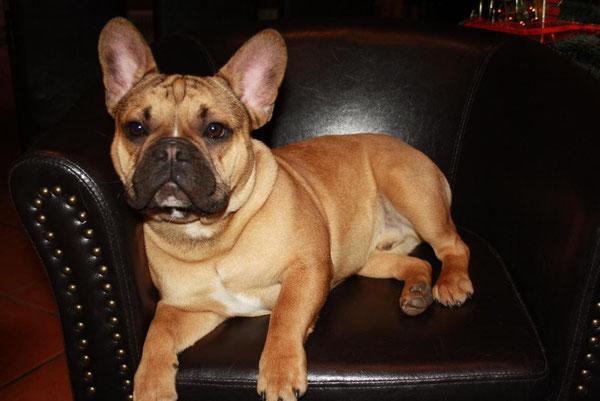 George ist ein besonders freundlicher , ausdrucksstarker und maskuliner Rüde