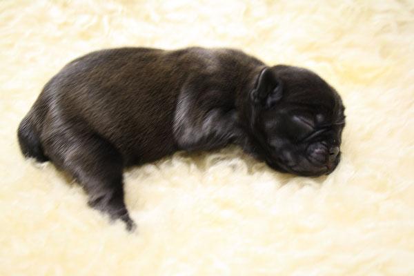 Carlotta am Tage der Geburt , satt und zufrieden und 300 Gramm schwer