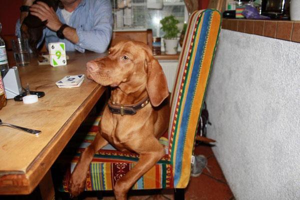 Elfe lernt Kartenspielen, der Dackel auf dem Tisch----Zustände sind das da!!!