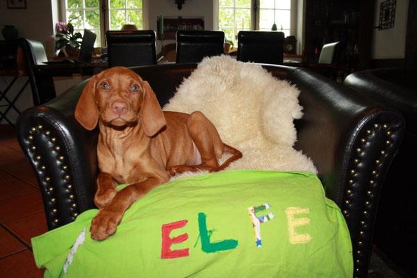Die Decke hat unsere achtjährige Lilly alleine für Elfe genäht...