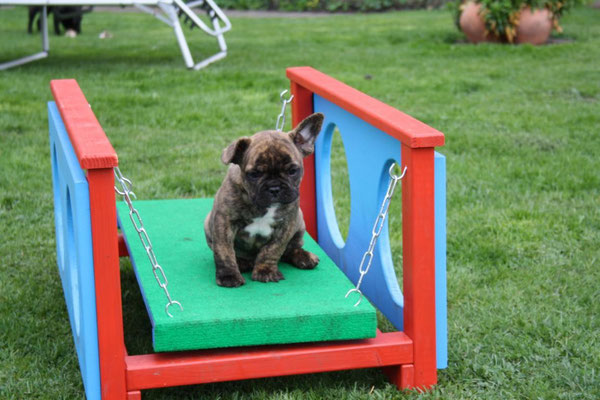 Der kleine Otto auf der Wackelbrücke!