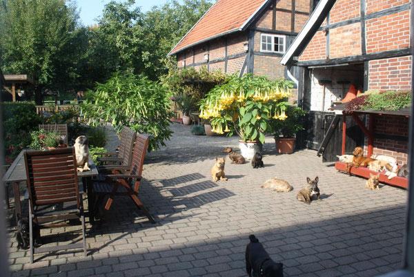 Der Blick aus der Küche auf unseren Hof!
