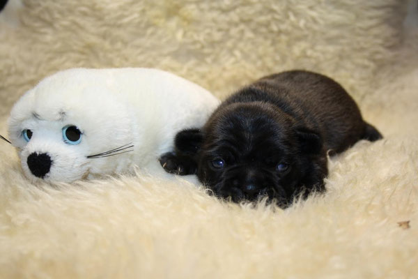 Zwei kleine Robbenbabys!