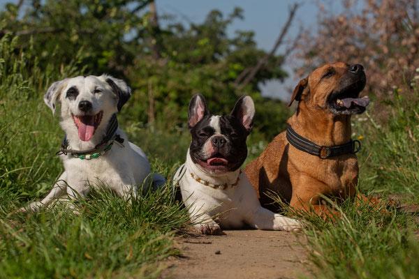 Moji (Mitte) mit seinen Freunden!