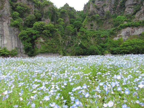 耶馬渓、青の洞門近く