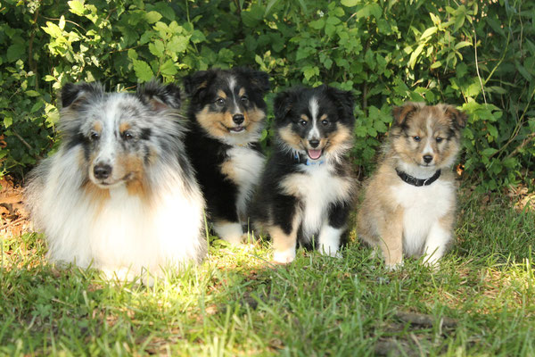 from left: Jack, Aiko, Aragorn, Angel Nelly