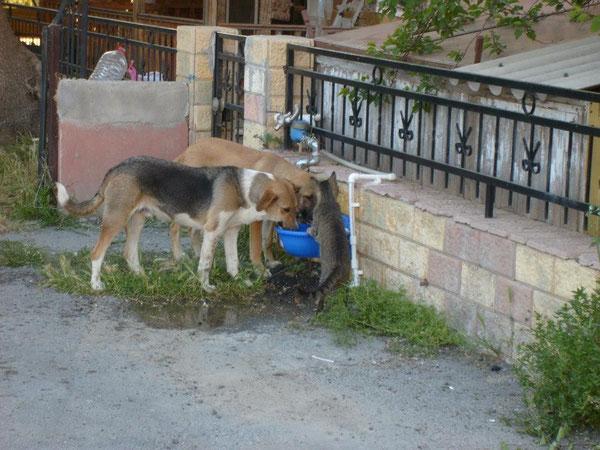 bitte macht mit - Wasser ist Leben!!!
