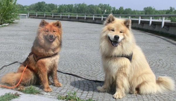 Ronja & Ron