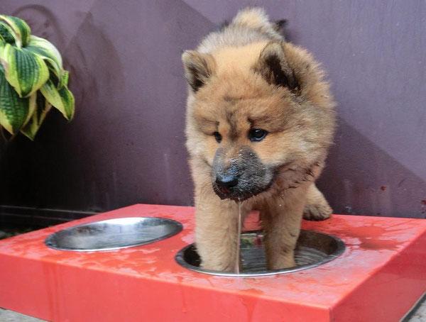 Ronja nimmt beim Trinken gerne ein Fußbad ...