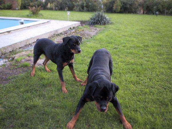 Akira und Basko
