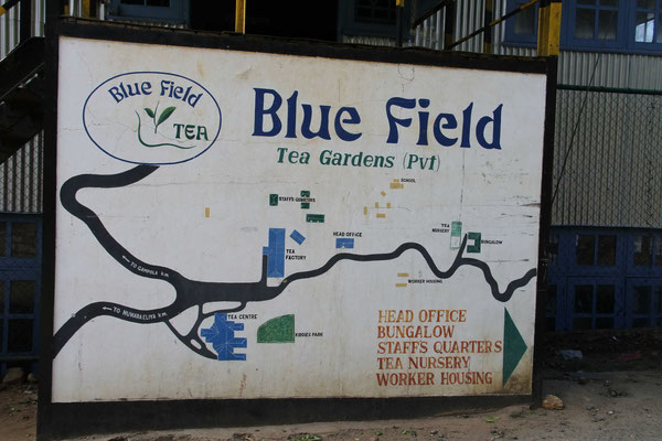 Blue Field Tea Gardens auf Ceylon