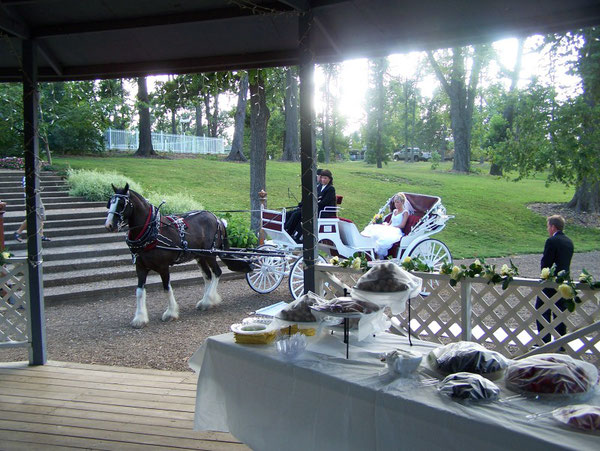 Bride arriving on horse and carriage while AAS provided ceremony music