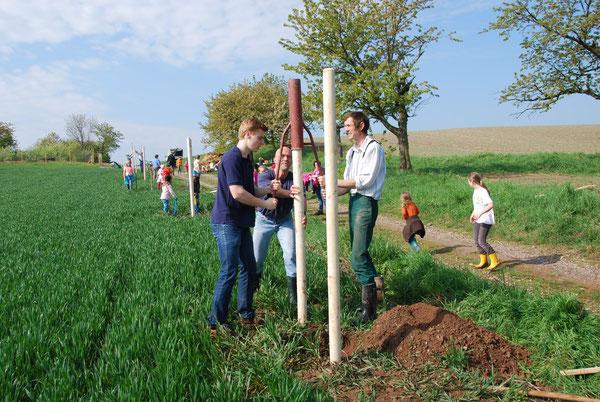 2014 wurden am Tag des Baumes 15 Kirschbäume am Wanderweg von Maxen nach Tronitz gepflanzt. Foto: G. Niggemann-Simon