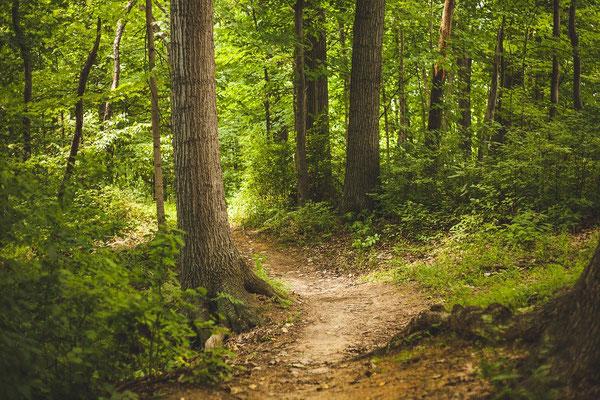 Wer den Weg zur Natur findet, findet auch den Weg zu sich selbst.