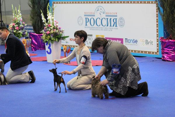 Бест шоу Россия -2015  -1 день
