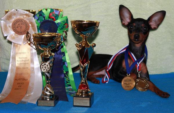Евразия -1, Евразия -2 2014 Лучшей щенок