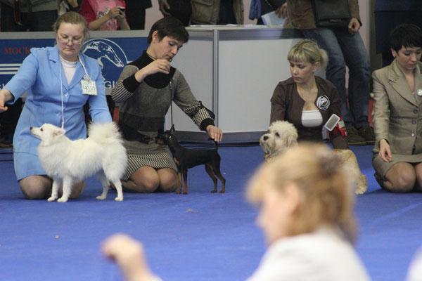 Бест щенков Евразия 2014
