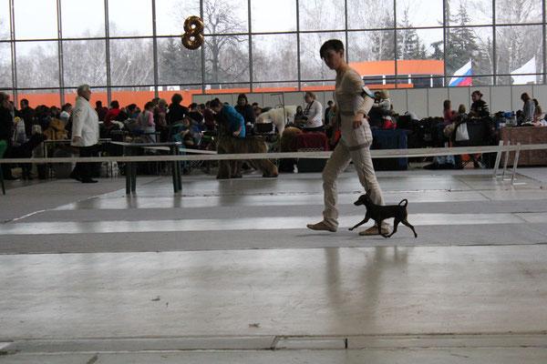 Фортуна эксперт JASNA MATEJCIC ( Хорватия) Лучший щенок