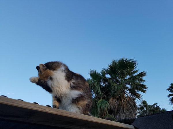 Katze Monica im Refugio Esperanza