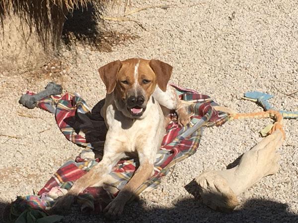 Tosca aus dem Refugio Esperanza - sie wartet schon so lange auf eine Familie