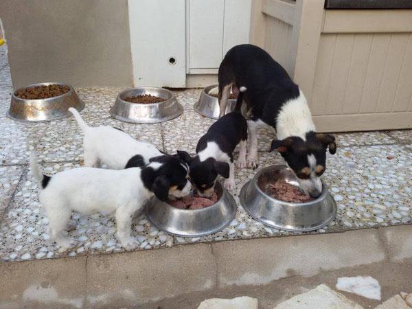 Die neuesten Bewohner des Refugio Esperanza - Mami und 3 Babies aus der Tötungsstation....