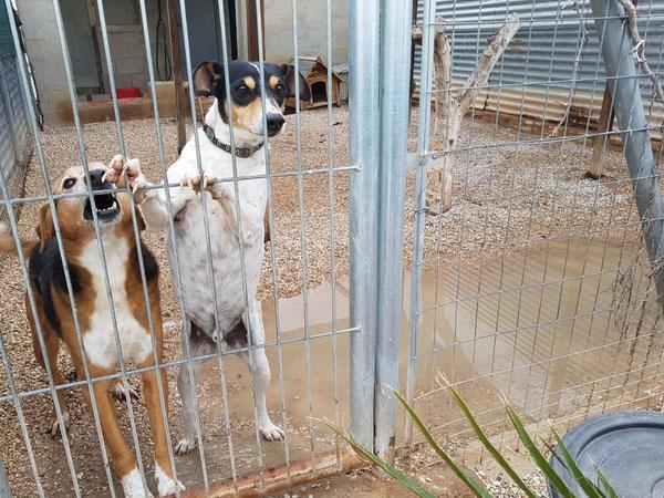 Adonis und Frutti - zwei Hunde, die ihr Leben im Refugio Esperanza verbringen