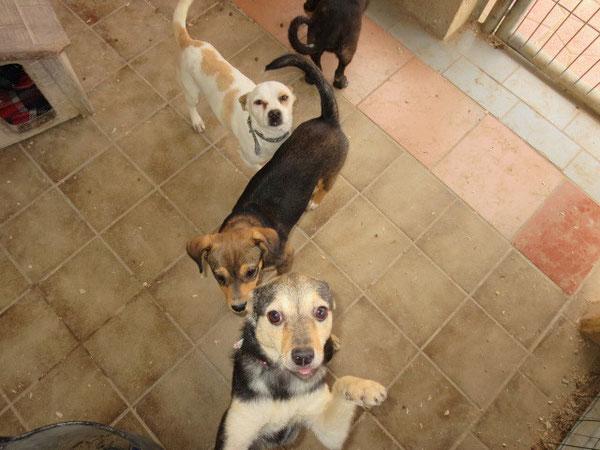 Yvi ist aus der Quarantäne ausgezogen und lebt jetzt bei Wendy, Harry, Pepito und Tayo