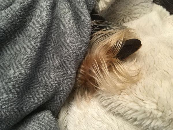 Suchbild mit Poquito (ehemaliger spanischer Tierschutzhund)