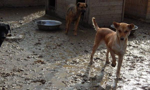 40,-- € für Sanierung der Böden in den Gehegen im Tierheim BUCOV/Ploiesti, Rumänien
