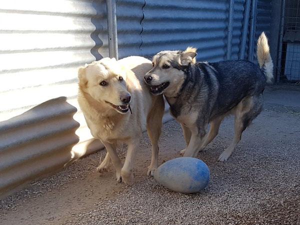 Luna und  Taka warten bereits seit 2015 auf ein zu Hause