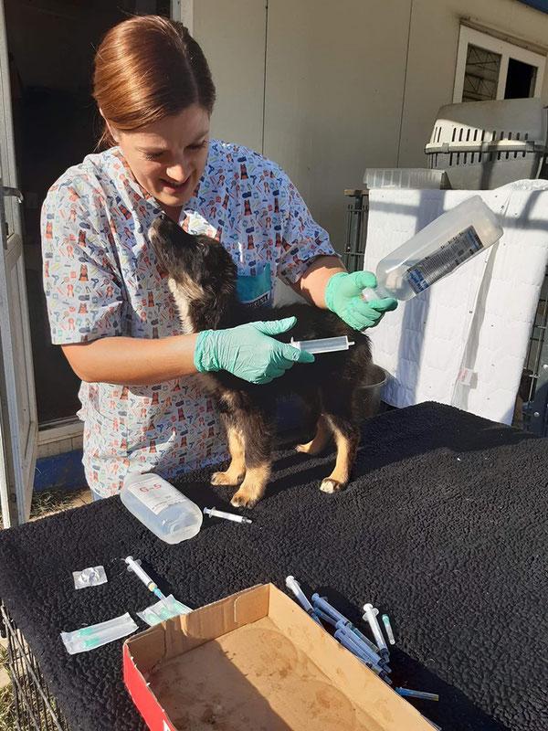 Tierärztin Irina bei der täglichen Arbeit im Shelter