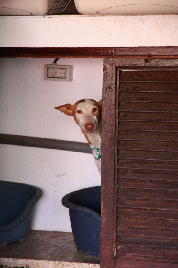 Besuch bei Pro Animal Tenerife eV  in 2011