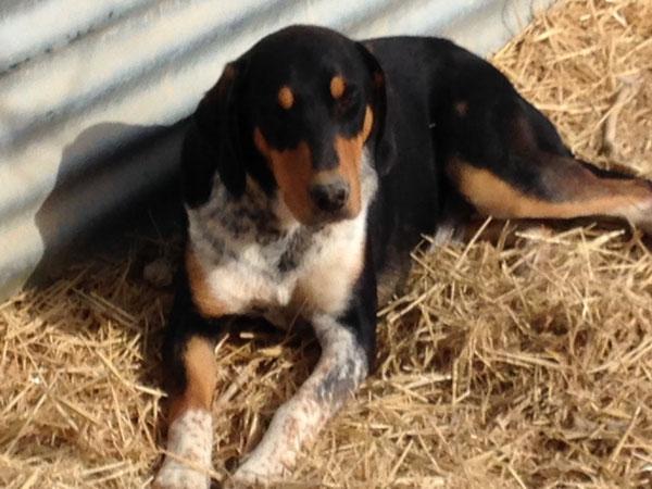"""Buddy - einer der """"übersehenen"""" Hunde im Refugio Esperanza"""