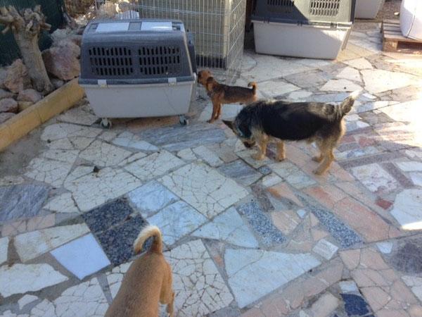 Mini Zwerg Suso schnüffelt mal in das Hundetaxi